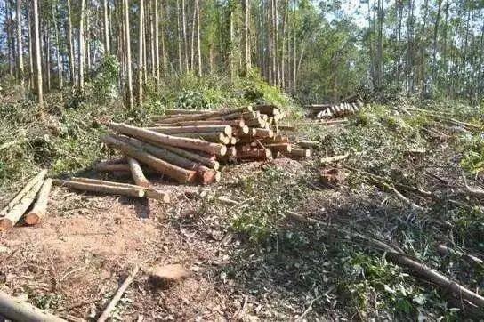 自家种的树,不是想砍就能砍!柳江一男子砍伐自家林木被判刑,这些采伐规定你都知道吗