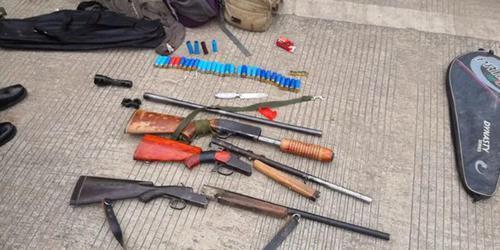 一男子带着霰弹枪和四条狗上山打野猪,获刑3年9个月