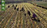 定了!农村土地承包及流转政策