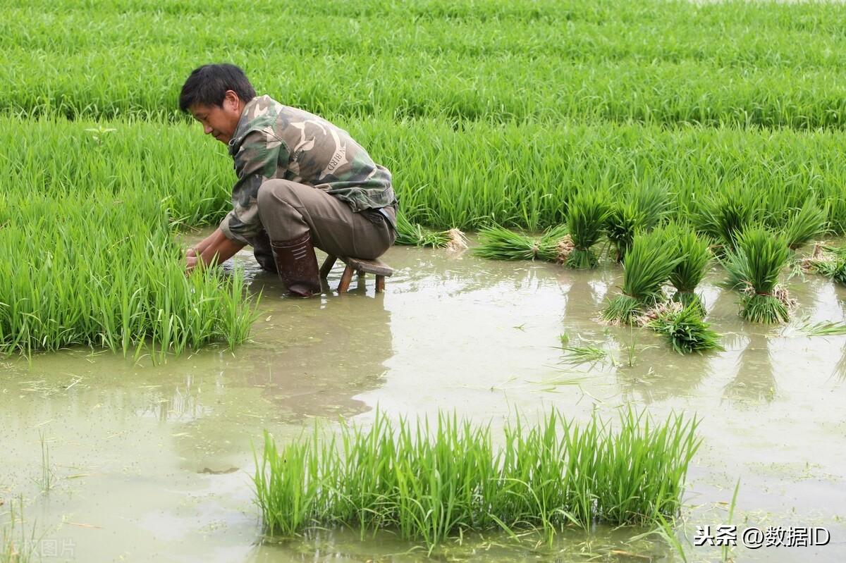 农村的剩余劳动力怎么安置,还有农村所有的农机具怎么办?