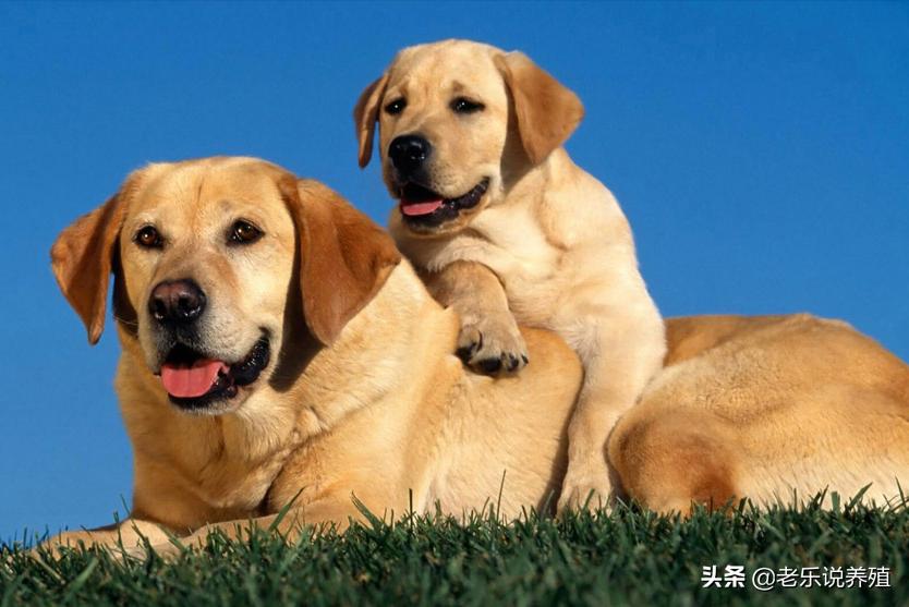 犬类养殖场需要什么手续