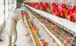 """农村养殖出""""新禁令"""",5种行为一律禁止,有养殖户又要难了"""