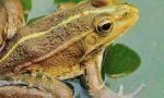 吃青蛙犯法吗 买卖青蛙怎么处罚