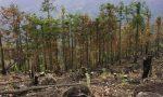 乱砍乱伐造成的后果你可知?盗伐林木罪的立案标准是什么?